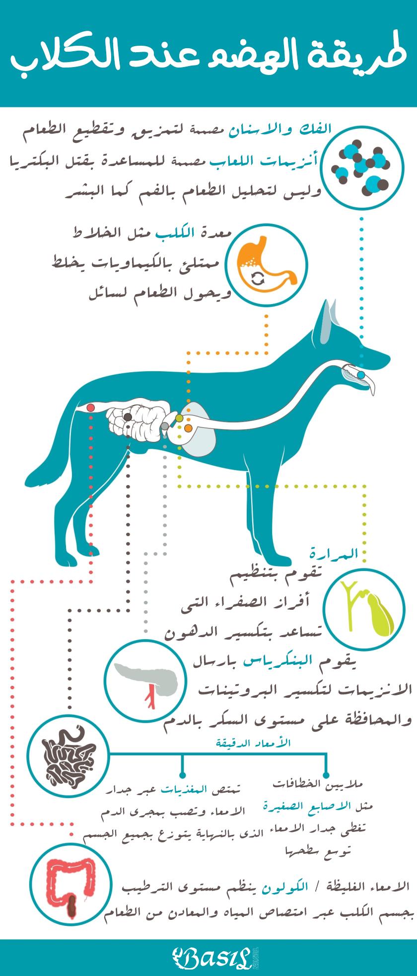 طرقة الهضم عند الكلاب Infographic Map Aic
