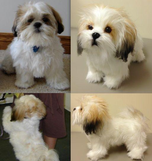 This Site Will Make A Stuffed Animal Clone Of Your Dog Custom Stuffed Animal Dog Stuffed Animal Shih Tzu Stuffed Animal
