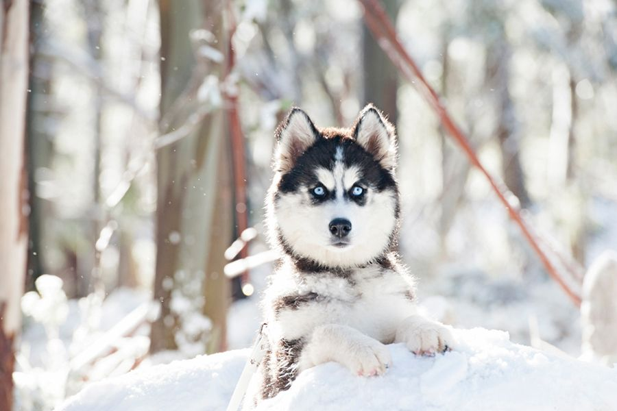 Those Eyes 3 3 3 Snow Dogs By Kirstie M Photography Pretty
