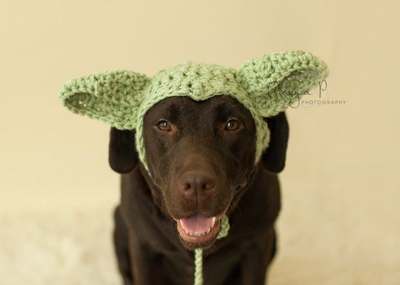 Download crochet pattern  040 - Large dog Yoda hat 4bb559c27d9
