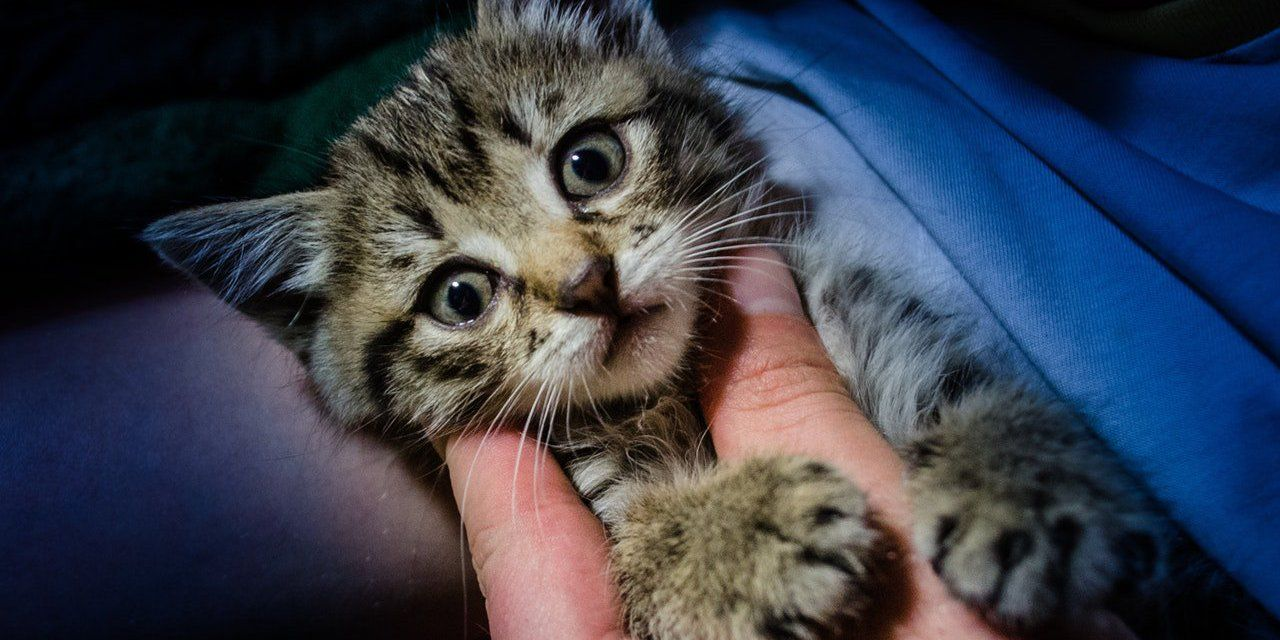 Sign Justice For Kitten Tortured And Killed For Animal Crush Video Baby Kittens Cute Animal Pictures Animal Rescue Stories