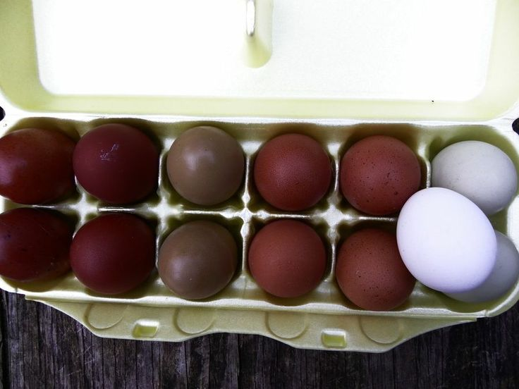 Chicken Color Chart French Black Copper Maran Eggs Color Chart