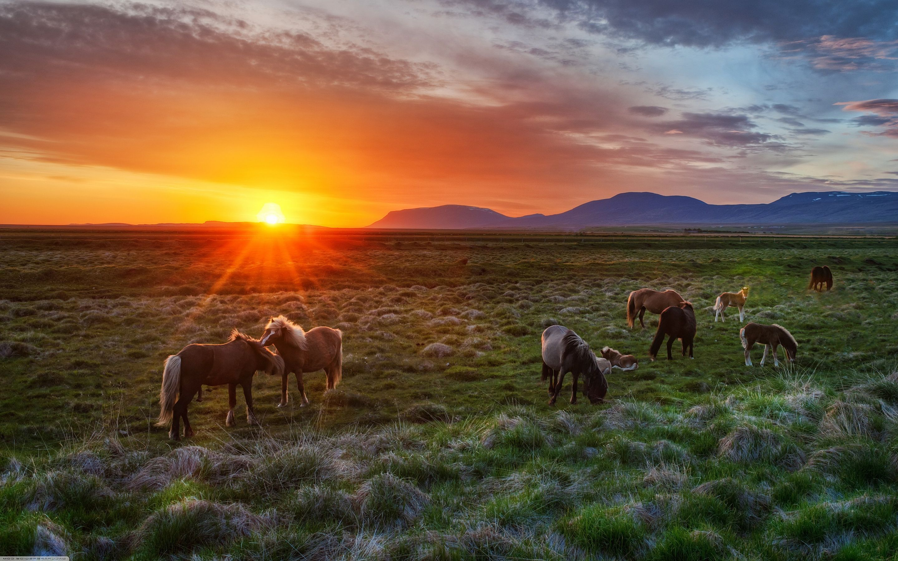 horse wallpaper wild horses sunset wallpapers pictures