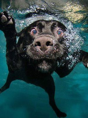 The Cutest Dogs Of Instagram Underwater Dogs Pets Dog Photos