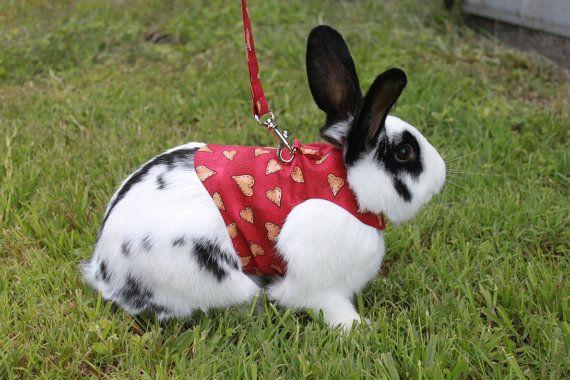 Valentine Pet Rabbit Harness! | fun pet products | Pinterest | Pet