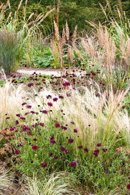 Simple prairie garden etchingham east sussex uk jo for Grasses planting scheme