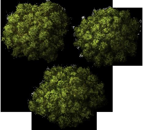 Tree Top Png | Brush | Pinterest