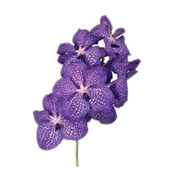 Vanda Orchids Blue Magic Orchids Wedding Flowers Vanda Orchids Wedding Flower Guide