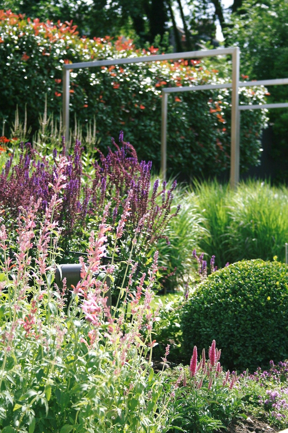 Perennial planting teamed with evergreen form