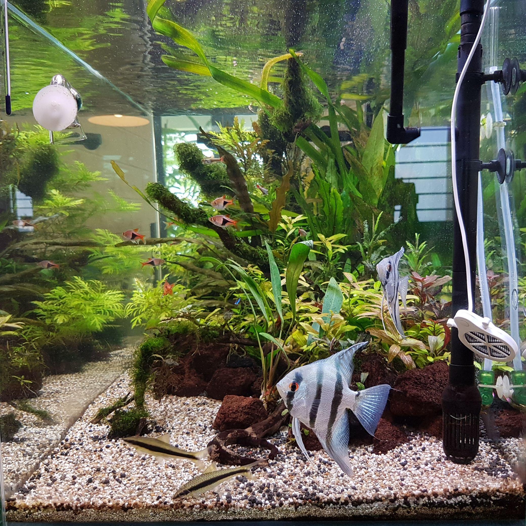 7757b5e1488deddb46426763aeea53c8 Incroyable De Aquarium Deco Des Idées