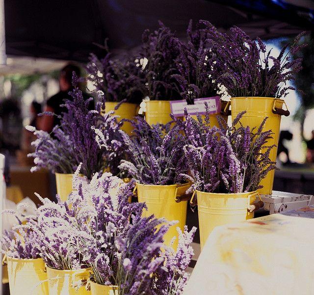 Lavande ***/*** J'adore ! Lavender