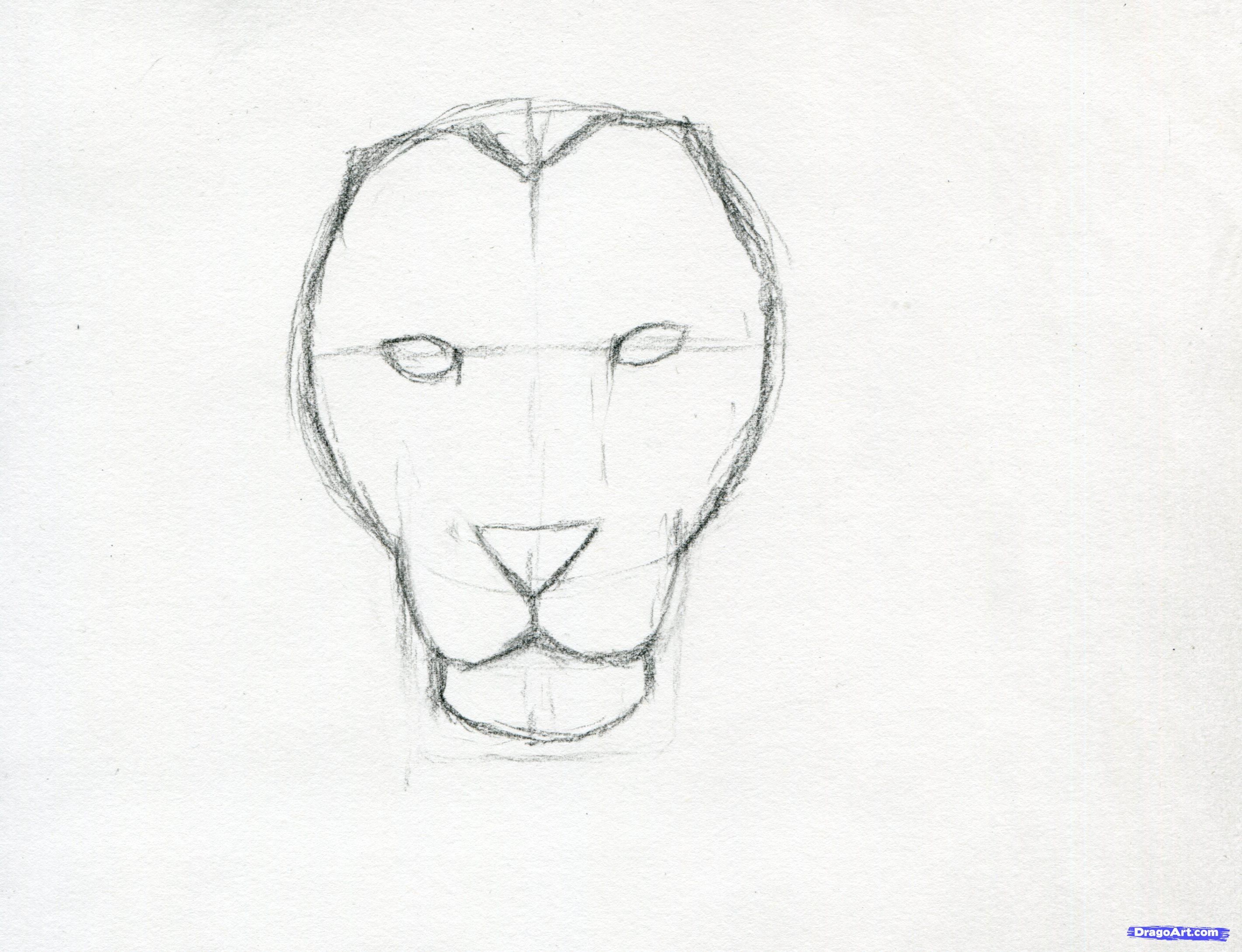 How To Sketch A Lion Step