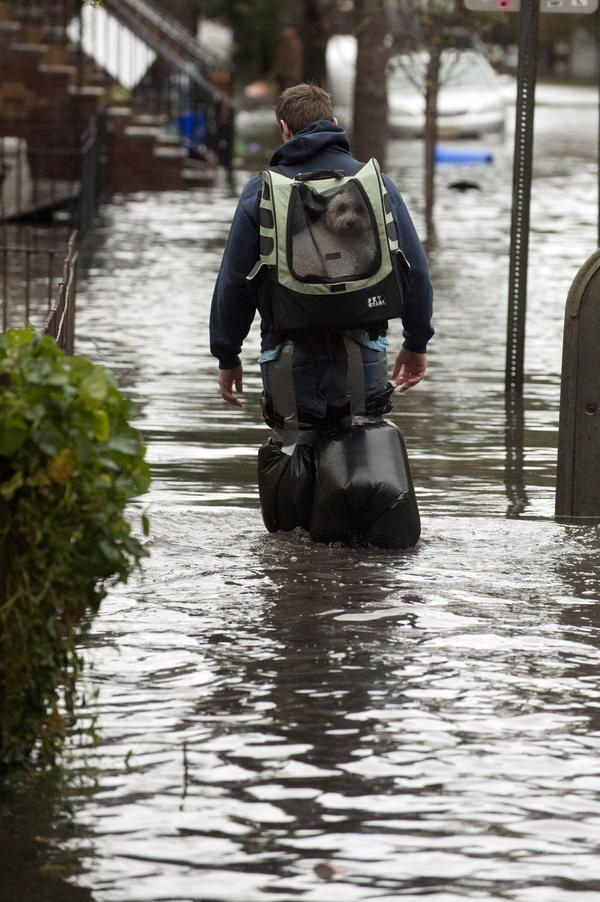 Richard Williams on Dog backpack, Hurricane sandy, Pets