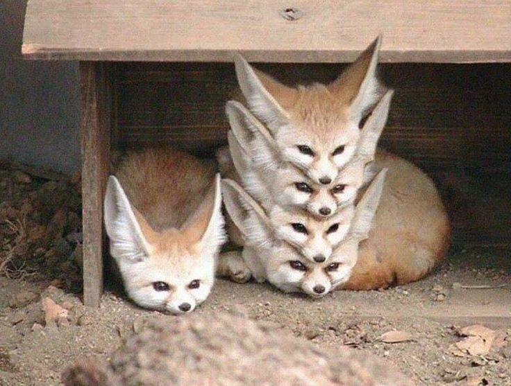 Im richtigen Moment erwischt: Diese Tierfotos sind perfekt! - Seoyung - Ich Folge #cutefox