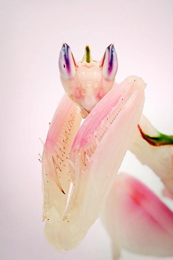 source : vivoverde.com.br  (collection insecte mante religieuse, palette rose pink)
