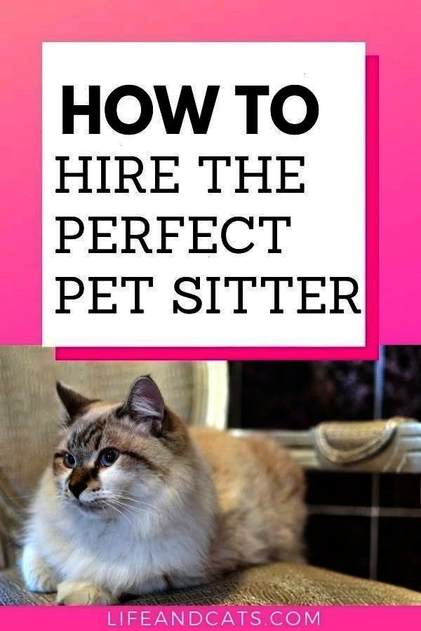 Leave My Cat Home Alone  Cat Health   Can I Safely Leave My Cat Home Alone  Cat Health  Informations About Can I Safely Leave My Cat Home Alone  Cat Health  Pin You can e...
