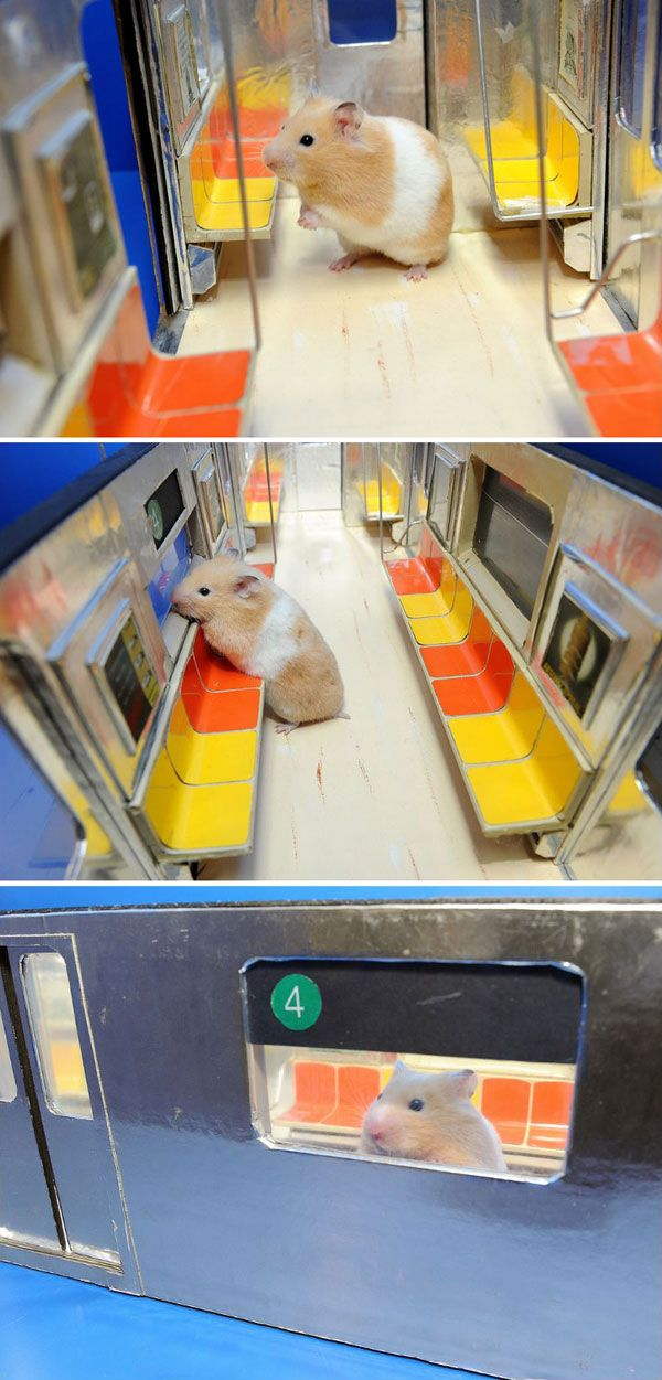 Public Transit Hamster Is So Cute But Animals On Metro Should Be In A Cage 3 Hamster Fun Public Transport
