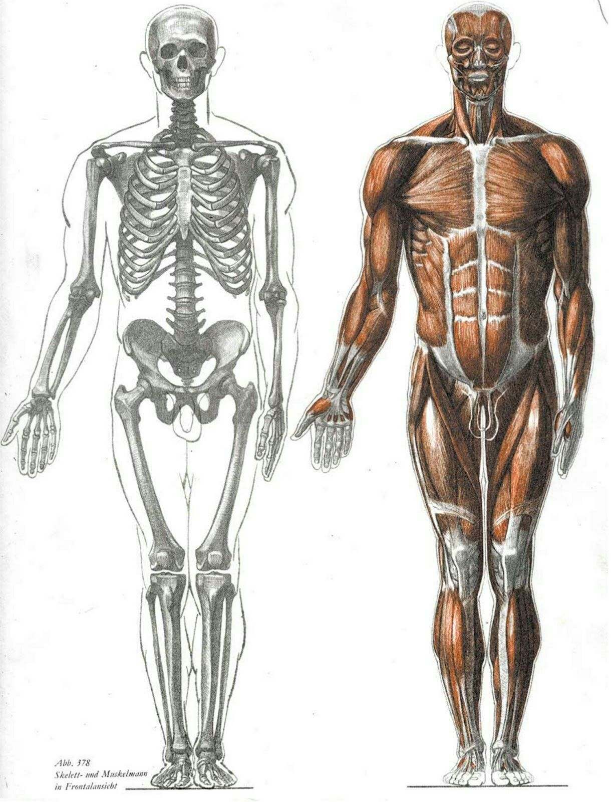 Pin By Lamew Chavis On Anatomy Pinterest Anatomy Drawing Human
