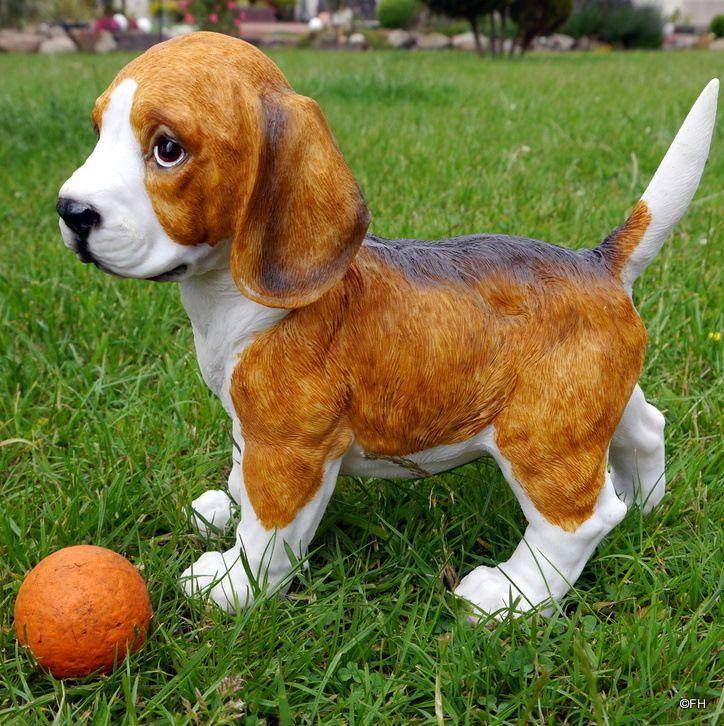 Basset Beagle Baby Hunde Hunde Welpen Beagle