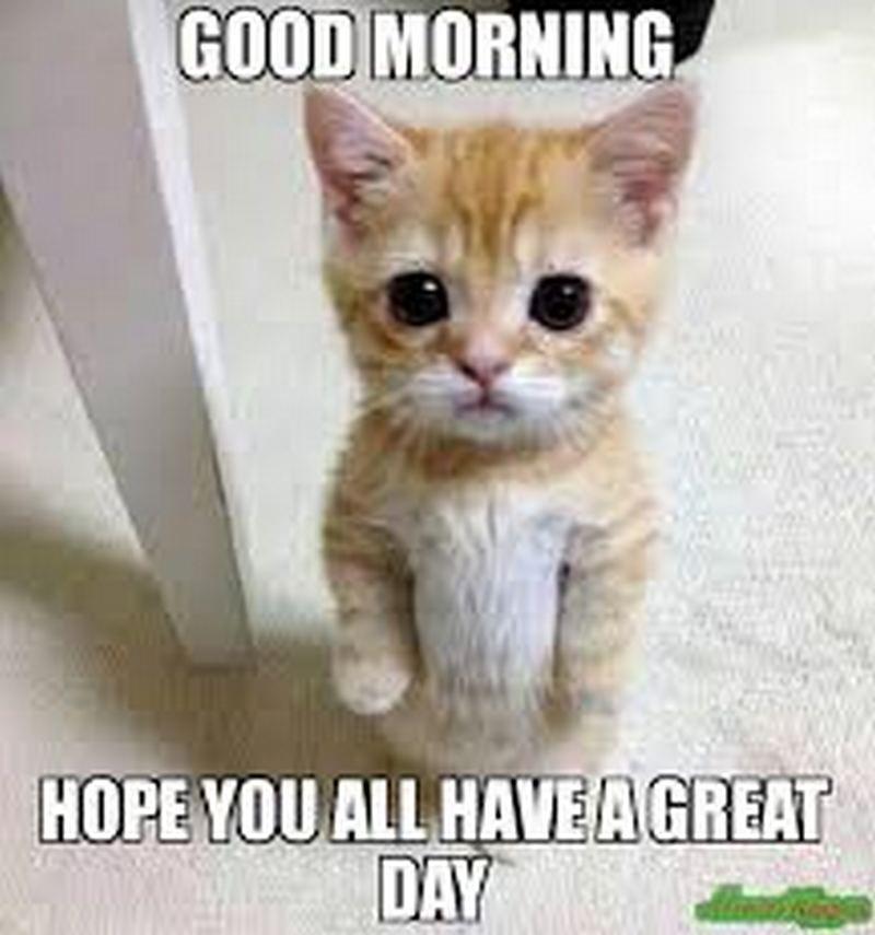 The Best Cat Meme Of The Decade 50 11 Cute Cat Memes Funny Cat Jokes Cat Jokes