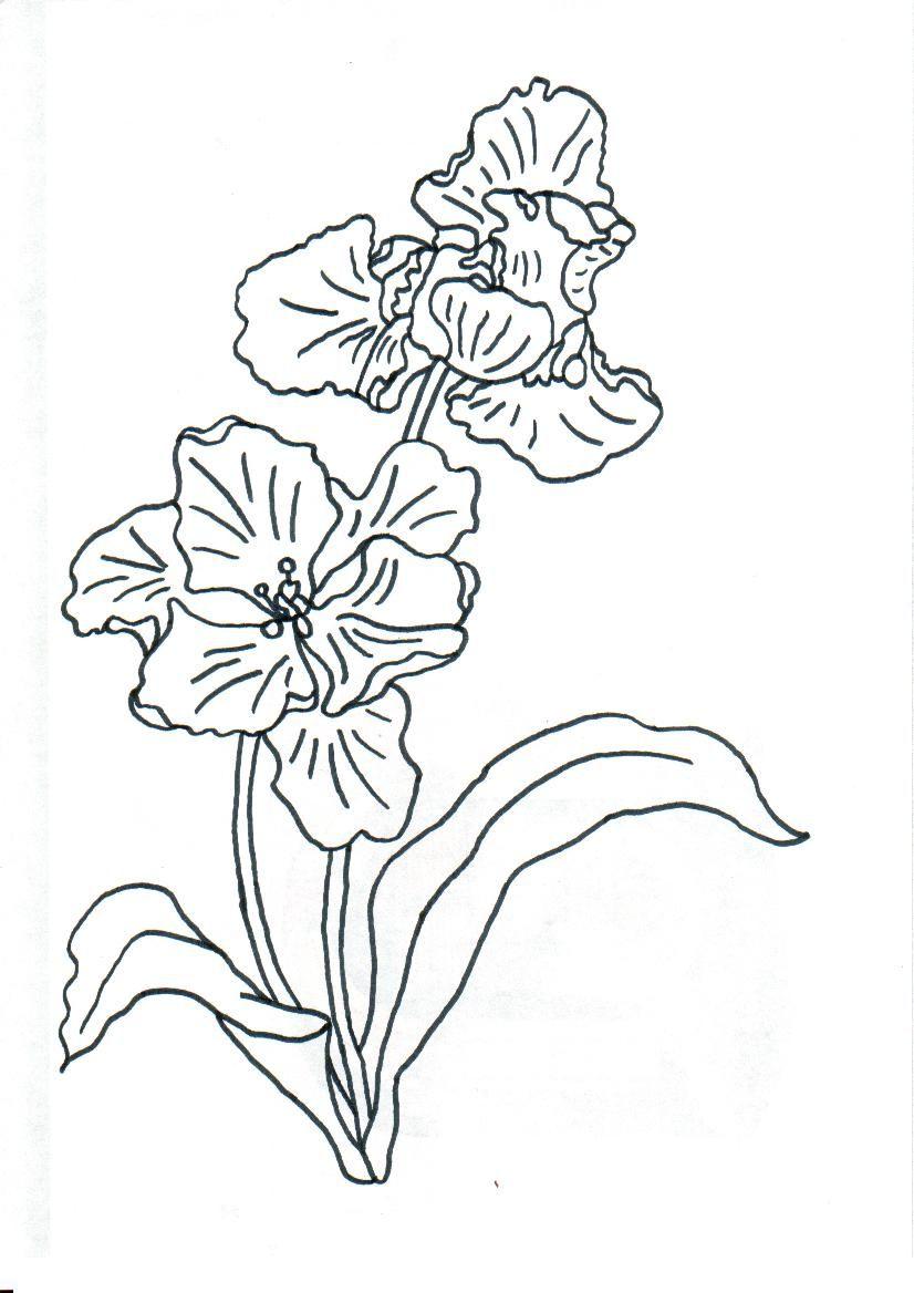 Pin lisääjältä lenka hradilová smáhová taulussa květiny pinterest