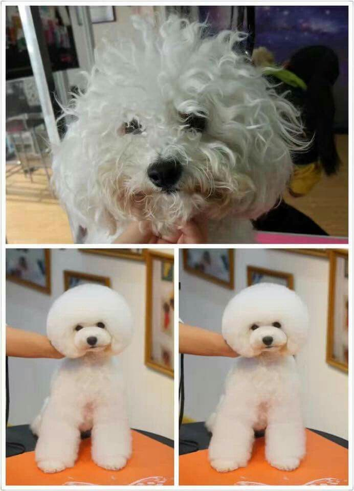 Pin By Jaimie Ludwig On Pet Grooming Dog Grooming Salons Poodle