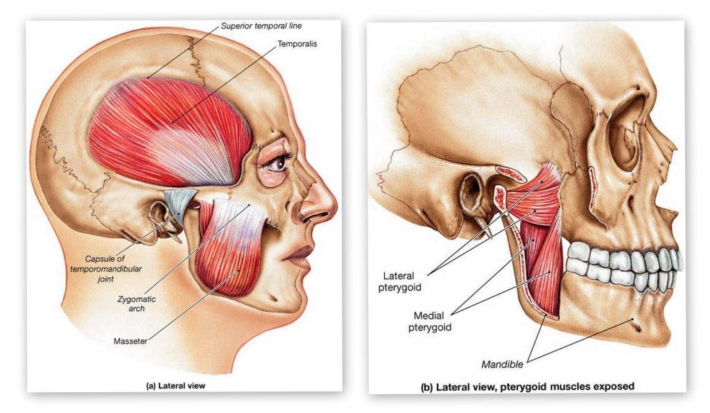 Temporomandibular Disorder Tmd Or Tmj Dysfunction Tmj Temporomandibular Joint Muscles Of Facial Expression
