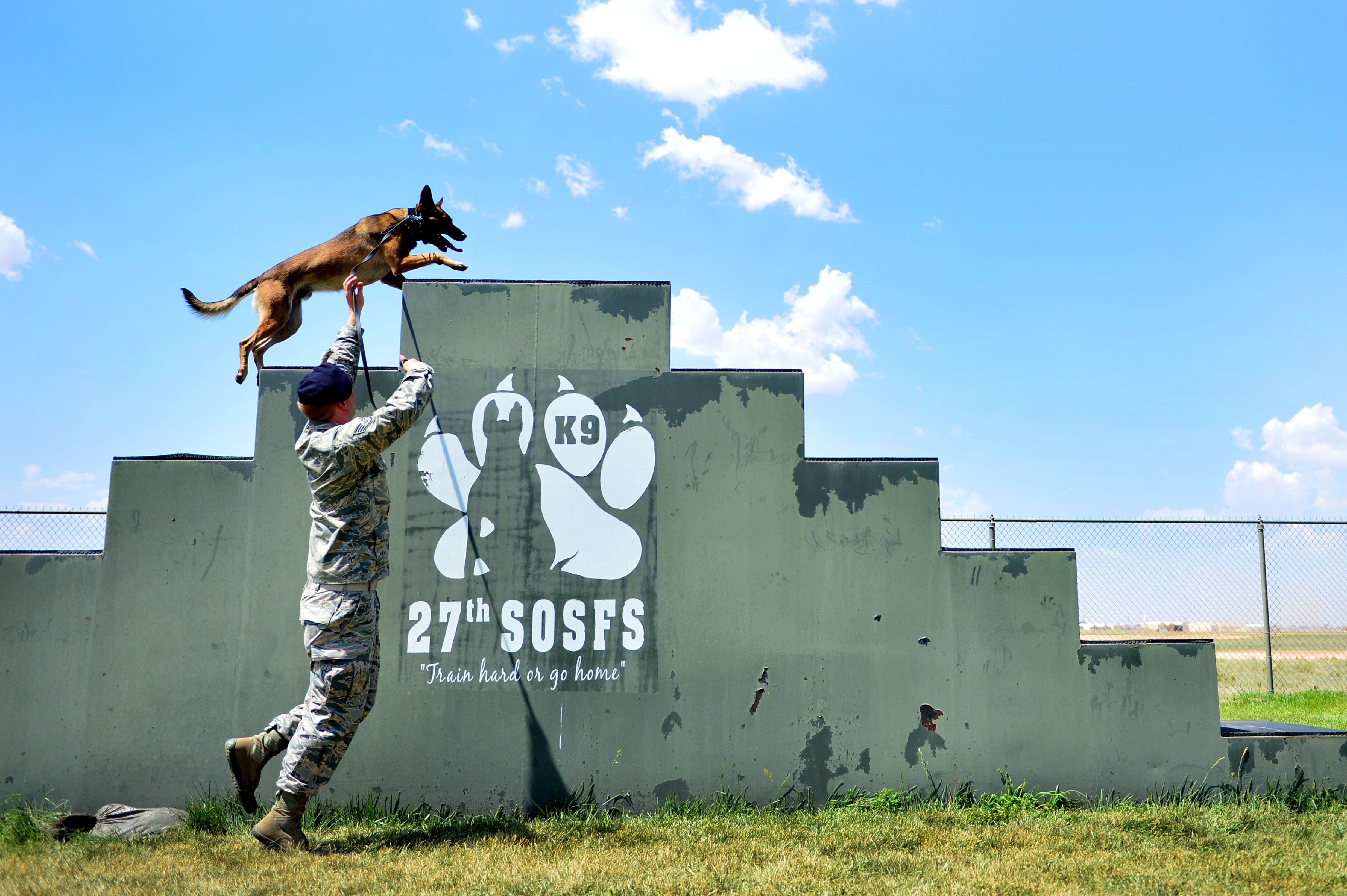Military working dog, Chandler runs up a staircase in an