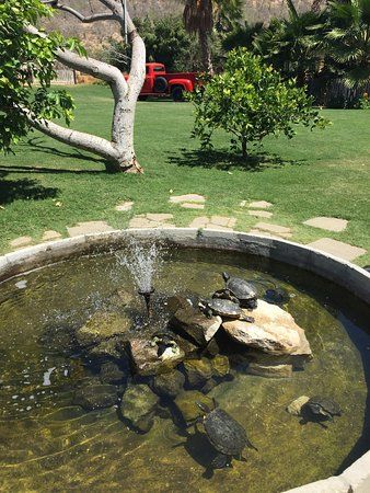 Flora 39 s field kitchen san jose del cabo picture turtle for Above ground pond ideas