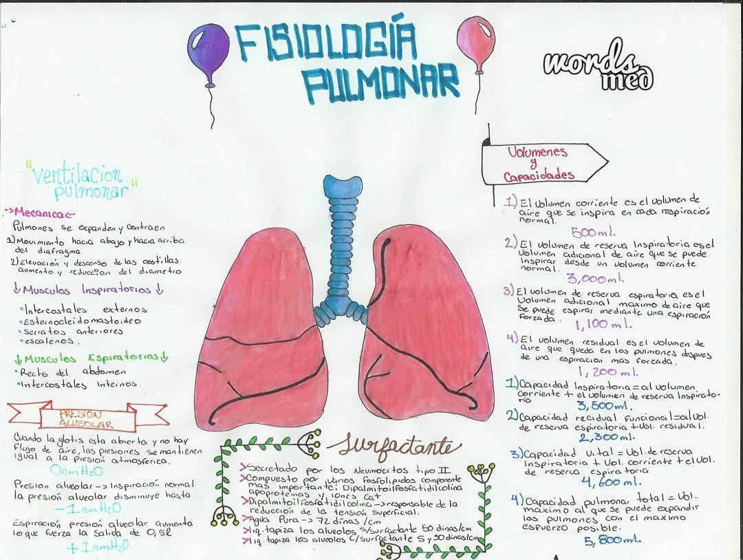 """4 Me gusta, 1 comentarios - #sonrienotodoesmedicina💎 (@words_med) en Instagram: """"Fisiología pulmonar 💙💚🎈🎈🎈🎈🎈🎈 #lungs #air #balloons #medical #doc #medicine #instaday #nuis #scrubs…"""""""