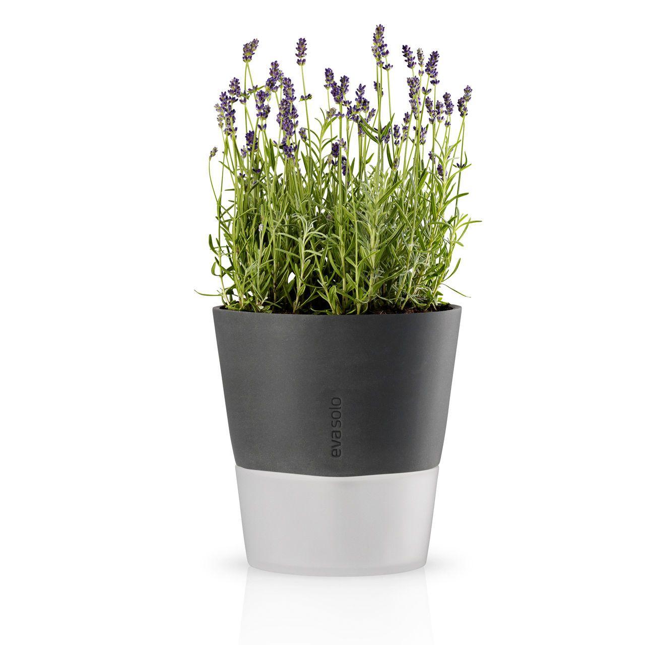Blumentopf mit wasserreservoir aus glas spezieller for Blumentopf glas