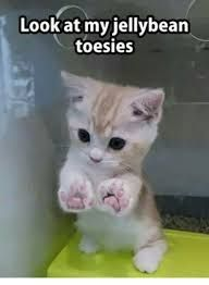 Image Result For Harry Potter Cat Memes Baby Animals Funny Cute Baby Animals Funny Animal Memes
