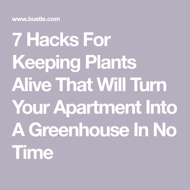 7 Hacks For Keeping Plants Alive That Will Turn Your ...