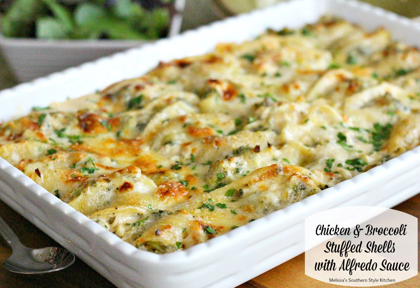 Chicken And Broccoli Stuffed Shells With Alfredo Sauce - Stuffed shells are a hot favorite at our house. My mind whirls with ideas of what type of goodness I can fill them with next.