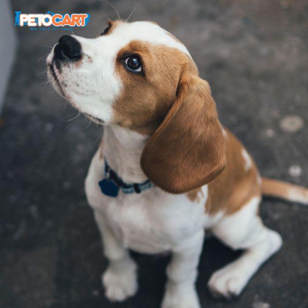 Dogs Dog Pet Pets Pentocart Petsforlife Petlove Doglove