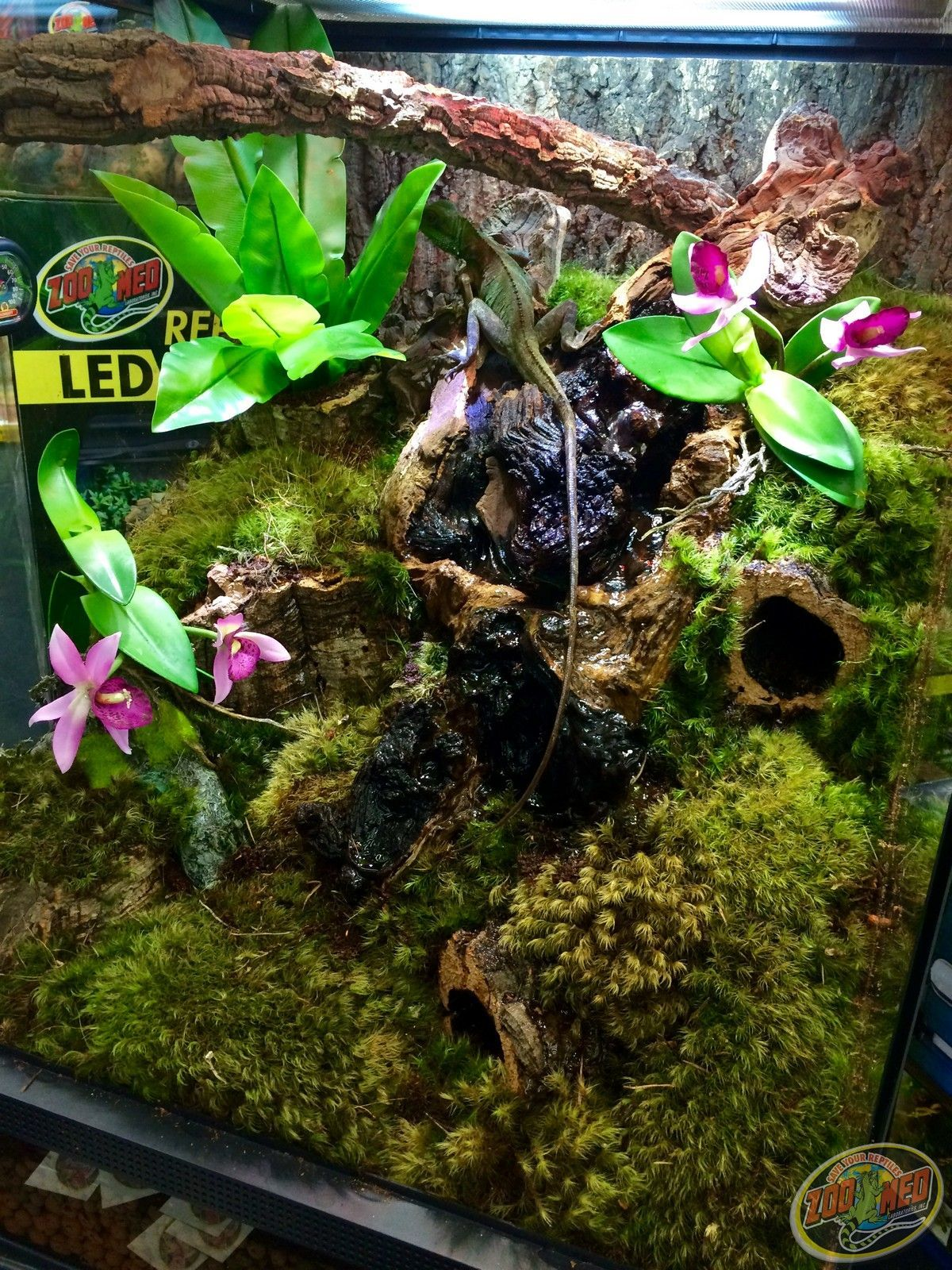 Terrarium for tropical plants like orchids lizards and frogs