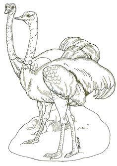 coloring page - on noah's ark ostrichesjan brett