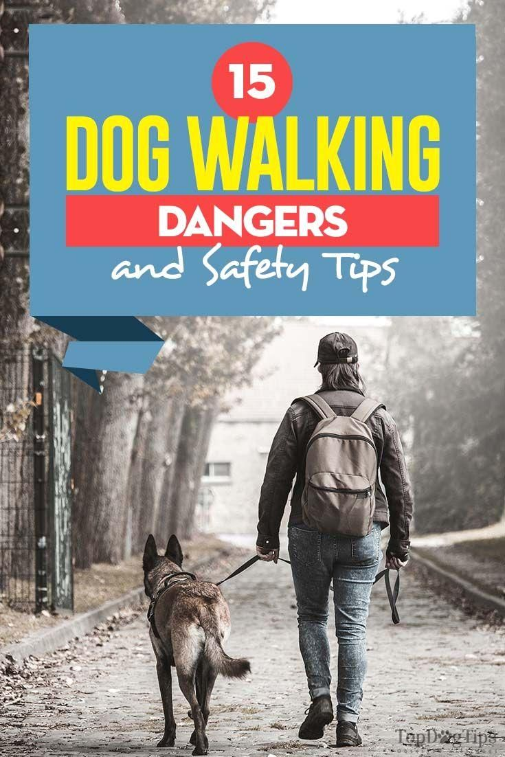 #dogwalking  #dogs  #pets  #dogwalker  #petsitter  #dogsitting  Depending on your area and the weather, there may be dog walking dangers lurking around the corner. Here are 15 dog walking safety tips you must follow. #Dangers #Safety 15 Dog Walking Dangers and Safety Tips