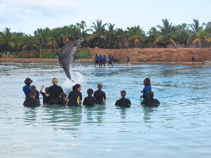 Top 20 Things to Do at Atlantis Paradise Island Resort ...