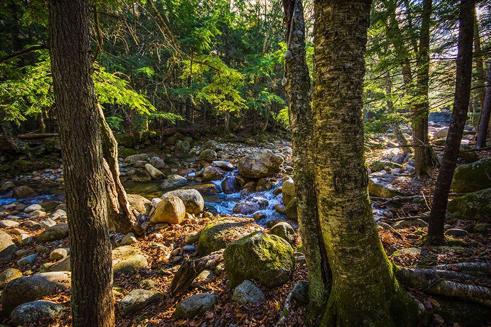 Sunlit stream in New England