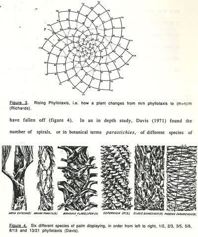 Fibonacci Sequence In Plant Phyllotaxis Map Diagram Patterns In