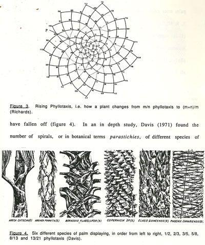 how to create fibonacci sequence in turing