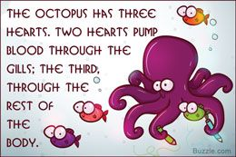 These Octopus Facts Will Surely Ignite The Curiosity Of Kids