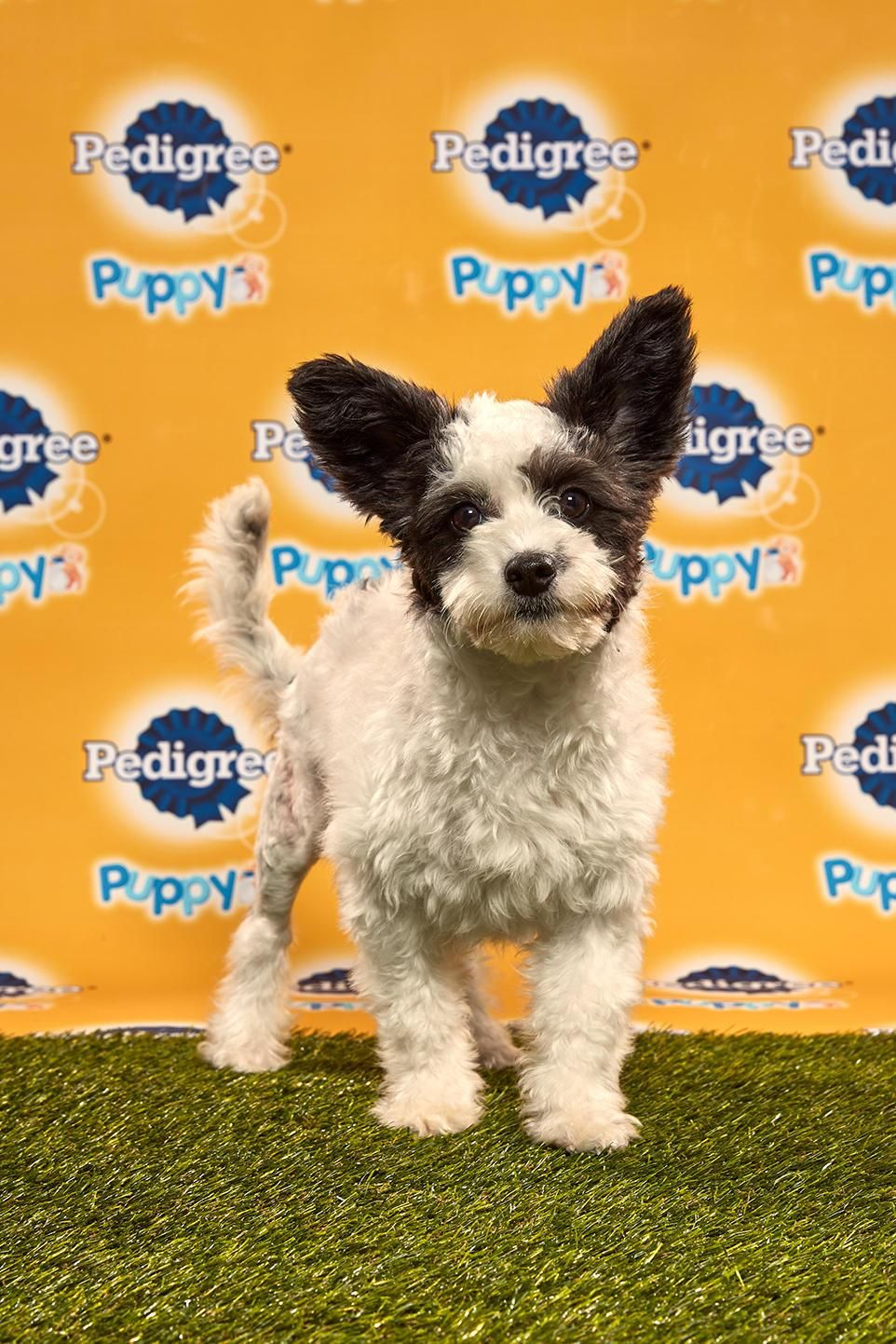 Puppy Bowl 2020 Photos Puppies, Puppy play, Treeing