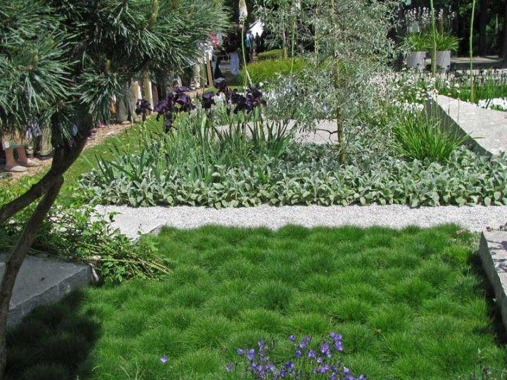 Festuca scoparia b renfell schwingel gr ser f r den for Pflanzengestaltung garten