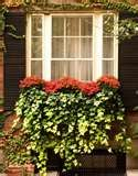 I do like greens in a window box.....