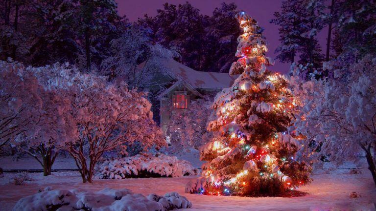 Christmas Lights Tree HD Wallpaper. - Christmas Lights Tree HD Wallpaper. Christmas Wallpapers