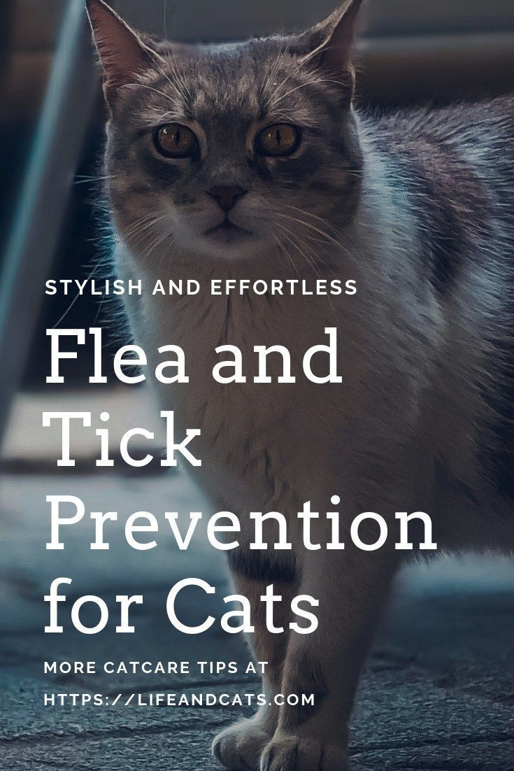 They Are Coming! Fleas and Ticks 101 Life & Cats Cat