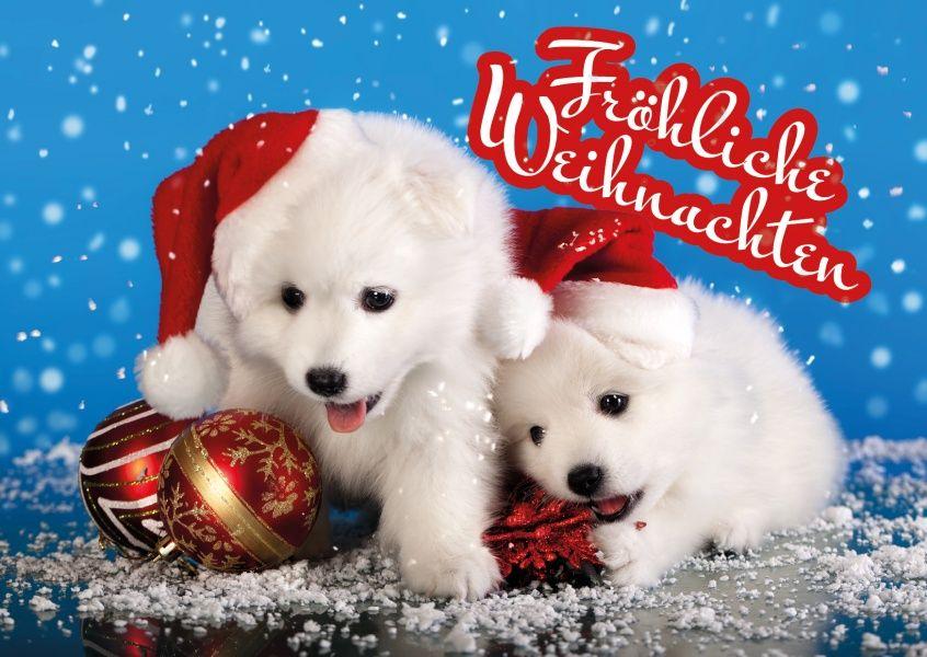 Welpenstarke fr hliche weihnachten christmas cards weihnachtskarten christmas christmas - Niedliche weihnachtskarten ...