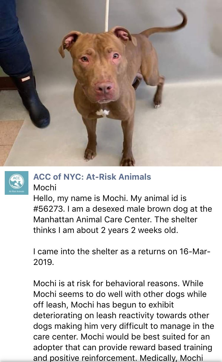 Precious Mochi Listed To Die 3 26 19 Ij2 Brown Dog Pet